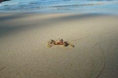 Λίγο καβούρι στην παραλία μαγγροβίων Στοκ Φωτογραφία