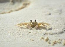 Λίγο καβούρι στην παραλία Στοκ φωτογραφία με δικαίωμα ελεύθερης χρήσης