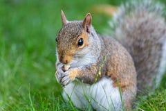 Λίγο και χαριτωμένος σκίουρος στοκ εικόνα