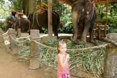 Λίγο καυκάσιο κορίτσι που στέκεται κοντά στους εξημερωμένους και δεμένους ελέφαντες στοκ εικόνα