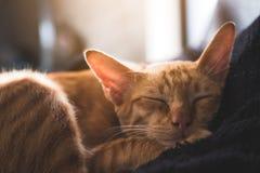 Λίγο καφετής ύπνος γατών σε ένα μαύρο μαξιλάρι με το αίσθημα άνετος και άνετος Στοκ εικόνα με δικαίωμα ελεύθερης χρήσης