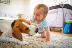 Λίγο κοριτσάκι με το σκυλί λαγωνικών σε ένα πάτωμα στο σπίτι στοκ εικόνες