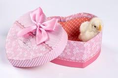 Λίγο κοτόπουλο μωρών στην καρδιά διαμόρφωσε το κιβώτιο που απομονώθηκε πέρα από το λευκό Στοκ εικόνα με δικαίωμα ελεύθερης χρήσης