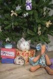 Λίγο κουνέλι κάθεται κάτω από το χριστουγεννιάτικο δέντρο Στοκ Εικόνες