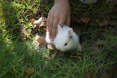 Λίγο κουνέλι με την αρπαγή χεριών παιδιών στον κήπο Στοκ φωτογραφία με δικαίωμα ελεύθερης χρήσης