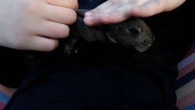 Λίγο κουνέλι στο βραχίονα παιδιών ζώο προσοχής παιδιών bunny μικρό απόθεμα βίντεο