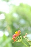 Λίγο κόκκινο ανθίζει λίγο λουλούδι Στοκ φωτογραφίες με δικαίωμα ελεύθερης χρήσης