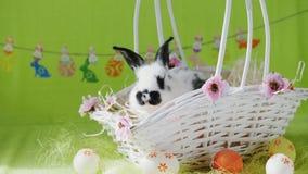 Λίγο λαγουδάκι στο άσπρο καλάθι με τα διακοσμημένα αυγά φιλμ μικρού μήκους