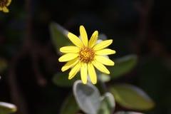 Λίγο λουλούδι εδώ στοκ φωτογραφία