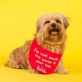 Λίγο μακρυμάλλες σκυλί στο κίτρινο υπόβαθρο Στοκ φωτογραφία με δικαίωμα ελεύθερης χρήσης