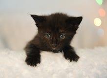 Λίγο μαύρο γατάκι που κρυφοκοιτάζει από μια άσπρη χνουδωτή καρέκλα abstract background backgrounds blurr blurred bright brightly  Στοκ Φωτογραφίες