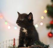 Λίγο μαύρο γατάκι σε ένα εσωτερικό Χριστουγέννων abstract background backgrounds blurr blurred bright brightly celebration christ Στοκ Εικόνες