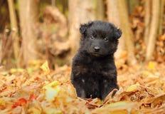 Λίγο μαύρο κουτάβι στον κήπο στοκ φωτογραφία με δικαίωμα ελεύθερης χρήσης
