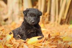 Λίγο μαύρο κουτάβι στον κήπο στοκ εικόνες με δικαίωμα ελεύθερης χρήσης