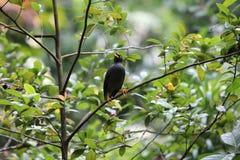 Λίγο μαύρο πουλί σε ένα δέντρο Στοκ Φωτογραφία