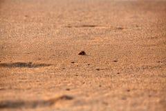 Λίγο μικροσκοπικό καβούρι ερημιτών Στοκ Φωτογραφίες