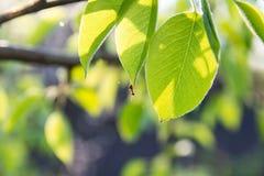 Λίγο μυρμήγκι στην πράσινη άδεια Στοκ εικόνα με δικαίωμα ελεύθερης χρήσης