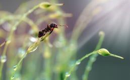 Λίγο μυρμήγκι στη δροσιά Στοκ φωτογραφία με δικαίωμα ελεύθερης χρήσης