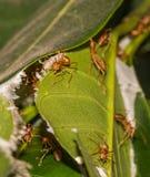 Λίγο μυρμήγκι Στοκ φωτογραφία με δικαίωμα ελεύθερης χρήσης