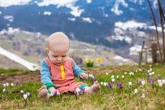 Λίγο μωρό που παίζει με τον κρόκο ανθίζει στα βουνά Άλπεων Στοκ Εικόνες
