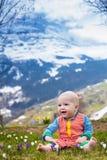Λίγο μωρό που παίζει με τον κρόκο ανθίζει στα βουνά Άλπεων Στοκ Φωτογραφία