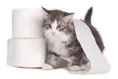 Λίγο νορβηγικό δασικό γατάκι με το χαρτί τουαλέτας κυλά Στοκ Φωτογραφία