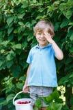 Λίγο ξανθό αγόρι που έχει τη διασκέδαση με τα μούρα επιλογής στο σμέουρο FA Στοκ εικόνα με δικαίωμα ελεύθερης χρήσης