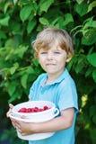 Λίγο ξανθό αγόρι που έχει τη διασκέδαση με τα μούρα επιλογής στο σμέουρο FA Στοκ φωτογραφίες με δικαίωμα ελεύθερης χρήσης