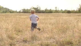Λίγο ξανθό αγόρι που τρέχει γύρω στον τομέα στο ηλιοβασίλεμα απόθεμα βίντεο