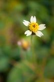 Λίγο λουλούδι στο μπάλωμα της χλόης Στοκ φωτογραφία με δικαίωμα ελεύθερης χρήσης