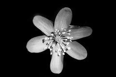 Λίγο λουλούδι στο σκοτεινό υπόβαθρο Στοκ εικόνα με δικαίωμα ελεύθερης χρήσης