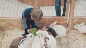 Λίγο παιδί ταΐζει τα κουνέλια με τη χλόη απόθεμα βίντεο