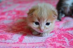 Λίγο παιχνίδι γατών στο κρεβάτι Στοκ Εικόνες