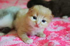 Λίγο παιχνίδι γατών στο κρεβάτι Στοκ Φωτογραφίες