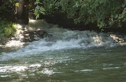 Λίγο περιστέρι σφυρηλατεί τον ποταμό Στοκ φωτογραφία με δικαίωμα ελεύθερης χρήσης