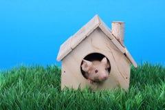 λίγο ποντίκι Στοκ εικόνα με δικαίωμα ελεύθερης χρήσης