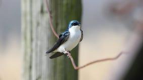 Λίγο πορτρέτο πουλιών Στοκ Φωτογραφίες