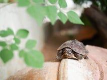 Λίγο πορτρέτο χελωνών Στοκ φωτογραφία με δικαίωμα ελεύθερης χρήσης