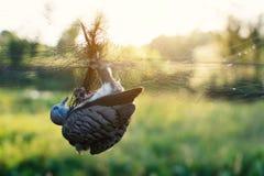 Λίγο πουλί είναι στο πλέγμα Στοκ Φωτογραφίες