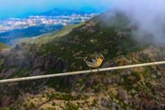 Λίγο πουλί στα βουνά Στοκ φωτογραφίες με δικαίωμα ελεύθερης χρήσης