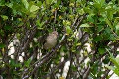 Λίγο πουλί στο δέντρο Στοκ φωτογραφία με δικαίωμα ελεύθερης χρήσης