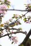 Λίγο πουλί στο όμορφο σκουλήκι δέντρων στο στόμα Στοκ φωτογραφία με δικαίωμα ελεύθερης χρήσης