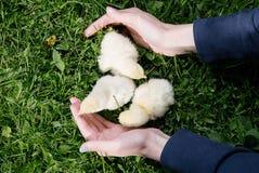 Λίγο πουλί της Τουρκίας Στοκ φωτογραφία με δικαίωμα ελεύθερης χρήσης