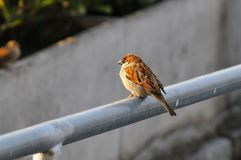 Λίγο πουλί Στοκ εικόνες με δικαίωμα ελεύθερης χρήσης