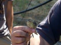 Λίγο πουλί που κρατιέται Στοκ Εικόνες