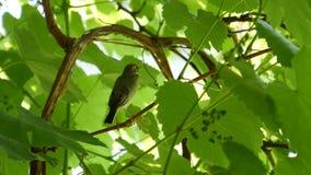 Λίγο πουλί στο δάσος φιλμ μικρού μήκους