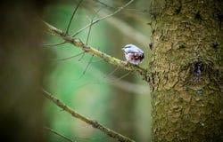 Λίγο πουλί στο δάσος Στοκ φωτογραφία με δικαίωμα ελεύθερης χρήσης
