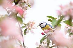 Λίγο πουλί στο όμορφο σκουλήκι δέντρων στο στόμα Στοκ Φωτογραφία