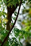 Λίγο πουλί τραγουδά Στοκ φωτογραφίες με δικαίωμα ελεύθερης χρήσης