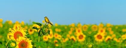 Λίγο πουλί Στοκ Εικόνες